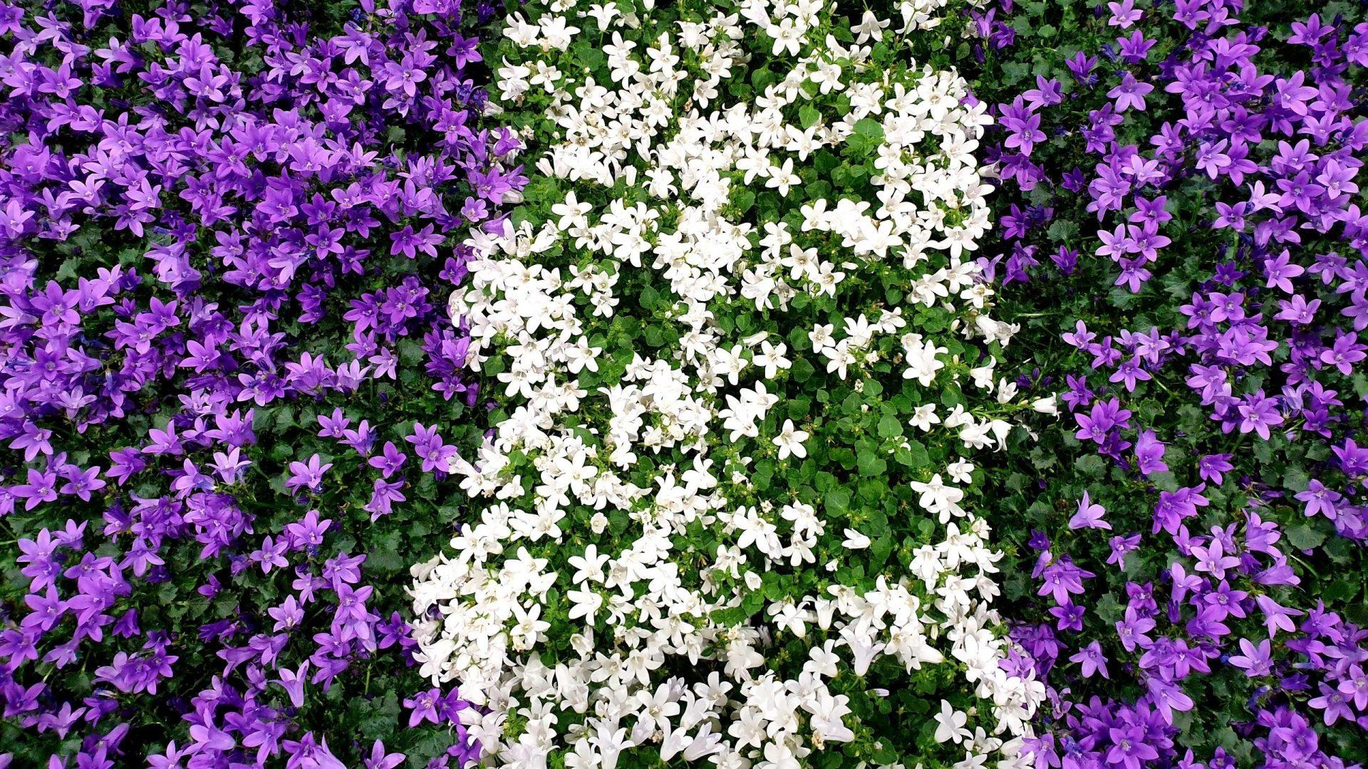 Oglej in Pordenone – Cvetlični sejem